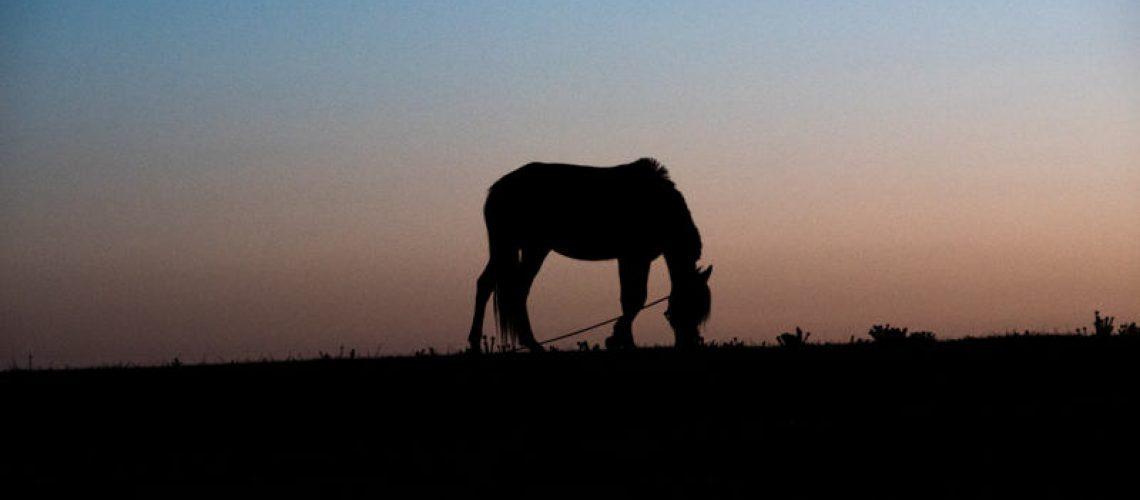 Liina-hevonen-hoito