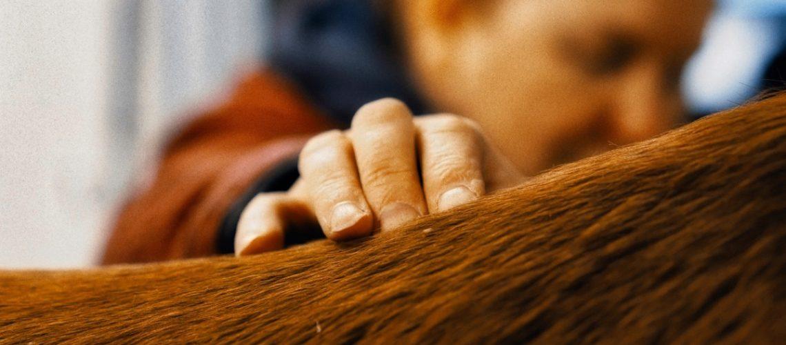OTE-Massage-equine